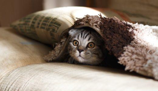 寝るときに使う「着る毛布」は短めのボタン止めタイプがおすすめ。